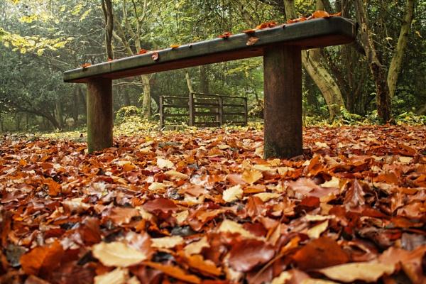 Autumn - at ground level by jonlonbla