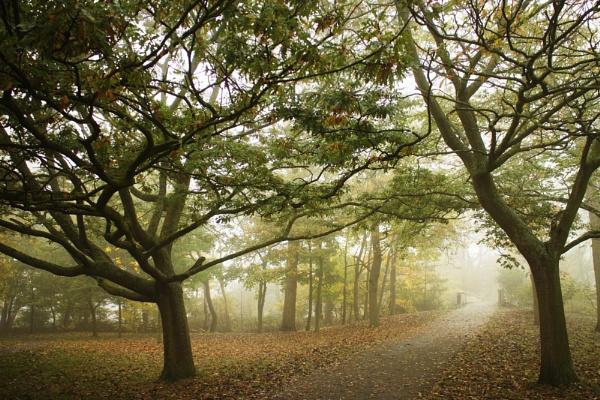 Mist in the Park by jonlonbla