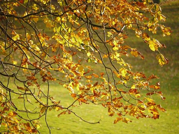 Autumn Light by mikesavage