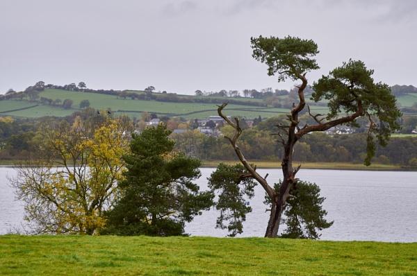 Trees by Meditator