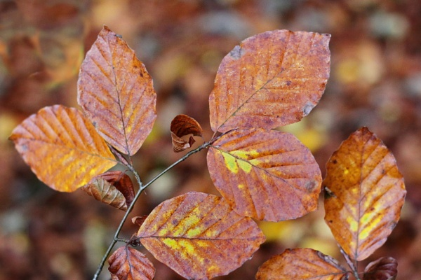AUTUMN LEAVES IN WOODLAND by yestermusic