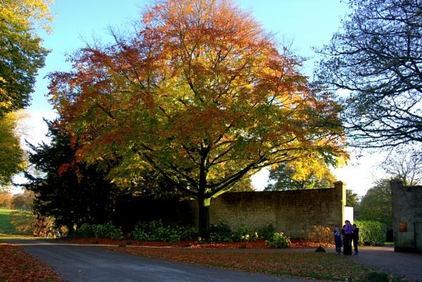 The Glory of a Tree by caj26