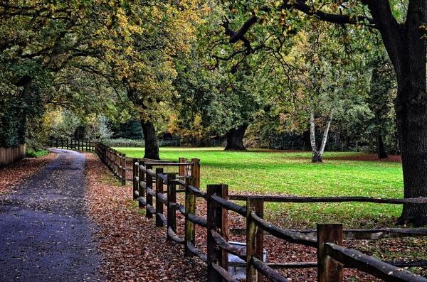 Autumn Walk by Webbs
