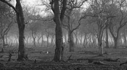 African Woods