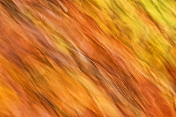Total Autumn Abstract by jonlonbla