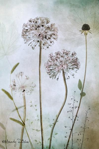 garlic by MandyD