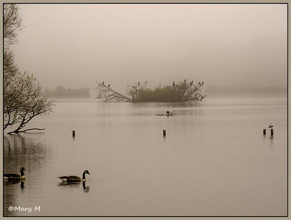 Foggy Day by marshfam19