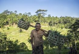 Rice Plantation Poser