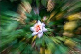 Creative Zoom Bursts