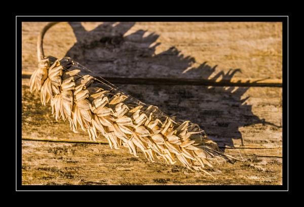 Seedy Shadows by NDODS