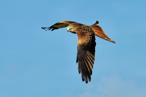 On the Wing by Denby99