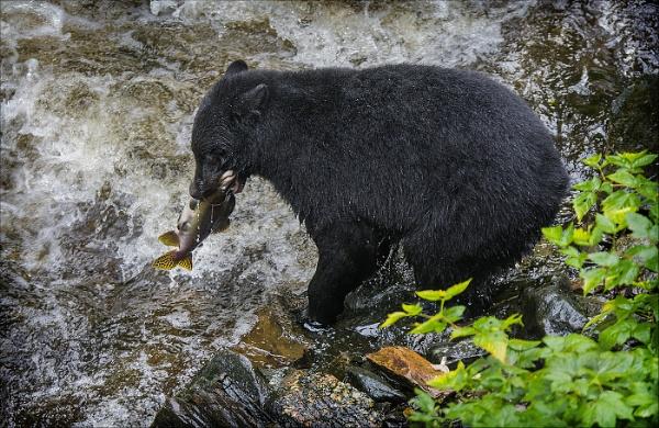 Salmon Fishing Alaska Style by fisherwick40