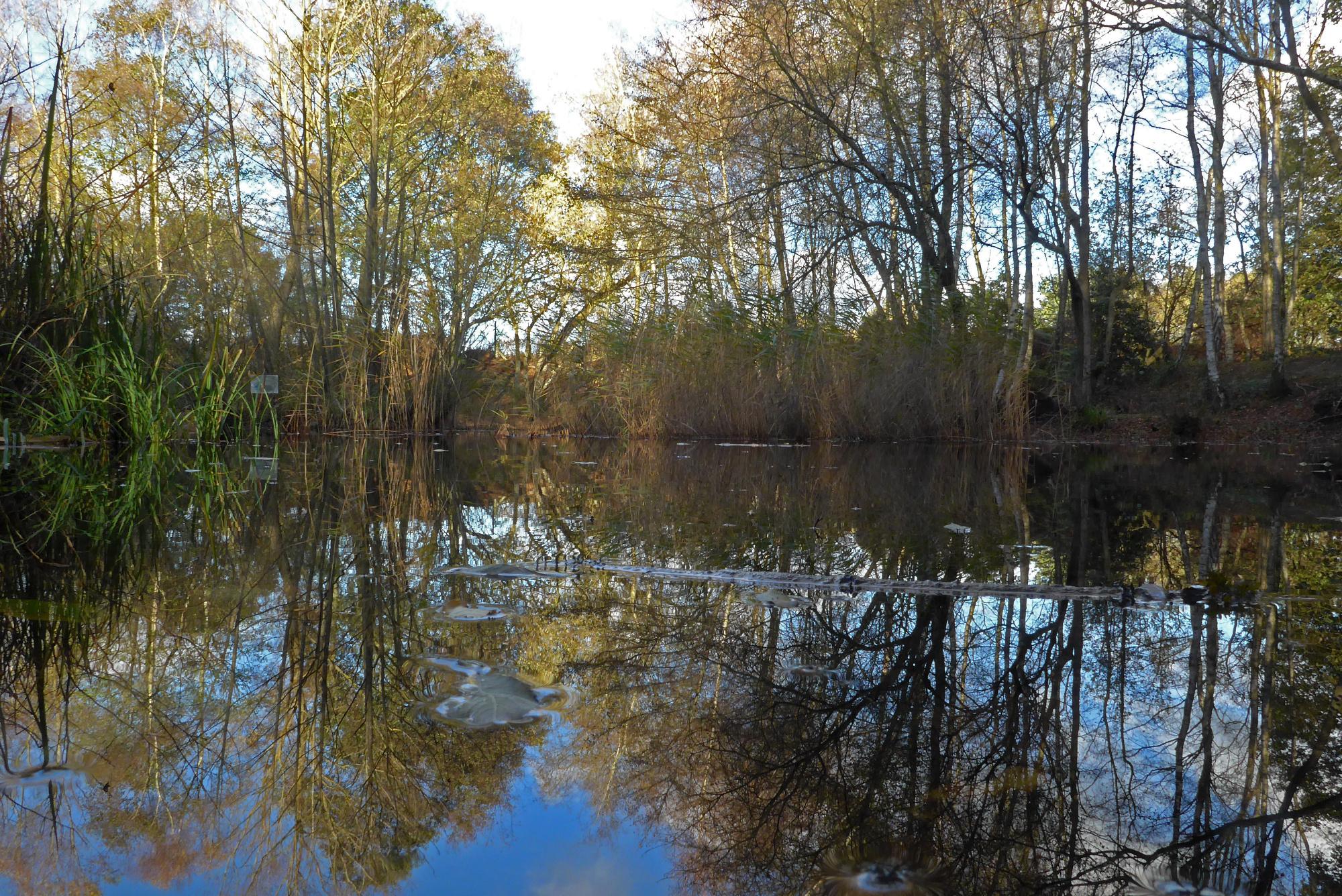 Fisherman's Pond