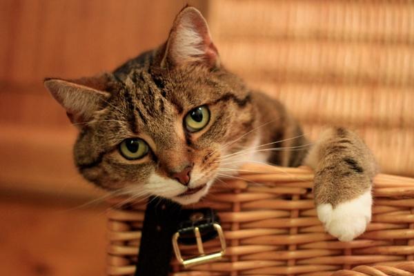 Cat Basket by MandsH
