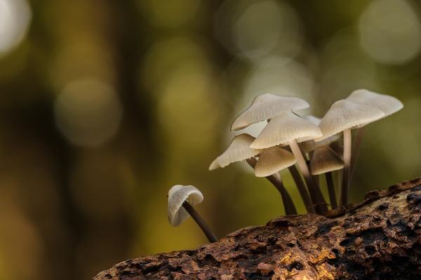 fungi by olafo