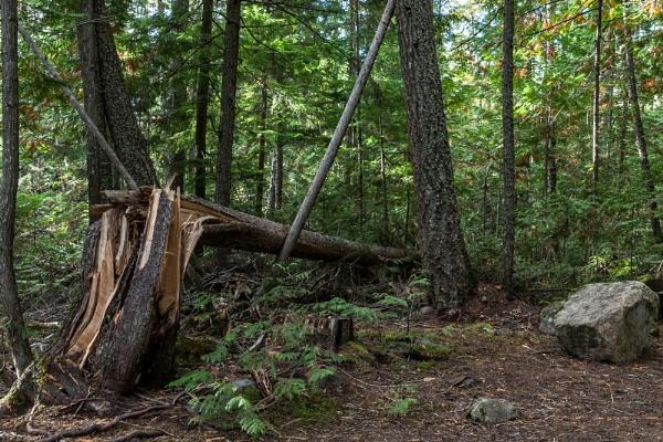 Fallen trees in Wells Grey Park by pdunstan_Greymoon