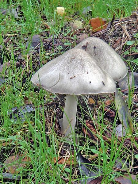 Fungi. by Gypsyman