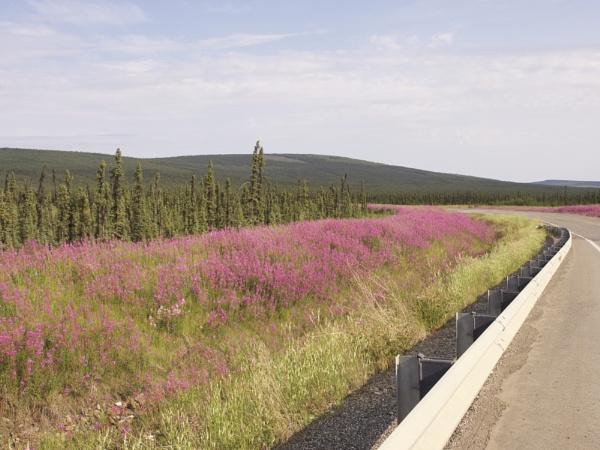 Alaska: July 2015 #14 by handlerstudio