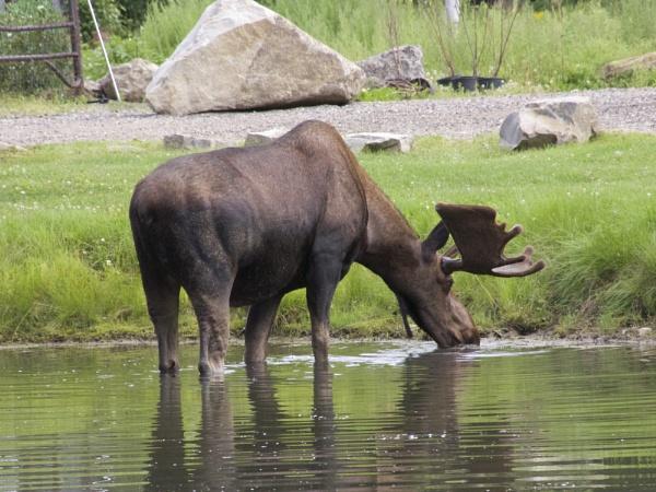 Alaska: July 2015 #16 by handlerstudio