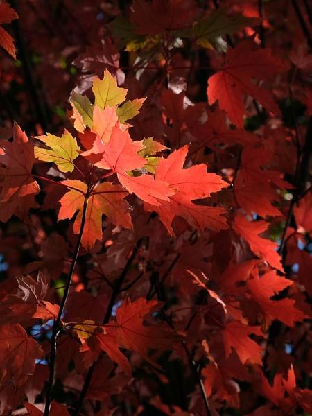 Autumn Splash by Pretium