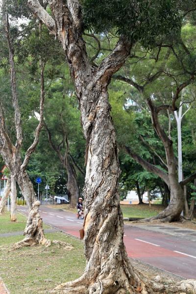 Just strange shaped trees. by hongkongphoto