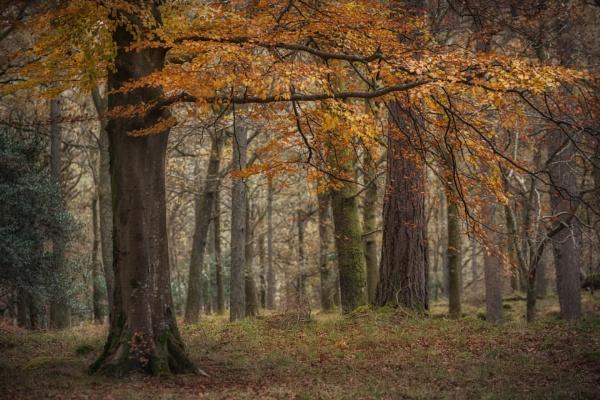 manesty woods by AlanRangerPhotography