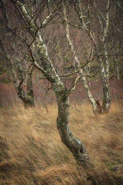 tree-o by AlanRangerPhotography