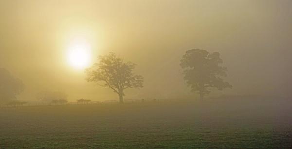 Misty Morning by BillRookery