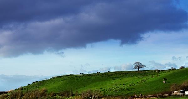 Landscape by Webbs