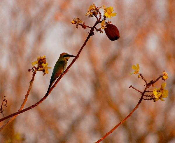 KUNUNURRA_7 by JN_CHATELAIN_PHOTOGRAPHY