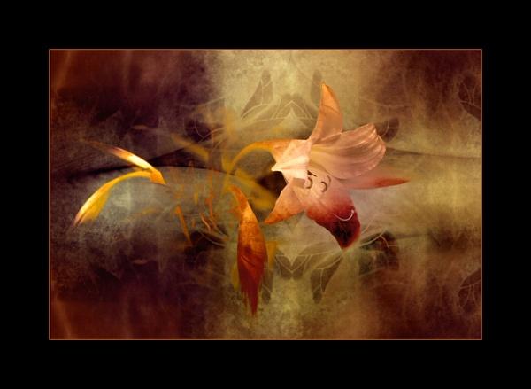 Flames by helenlinda