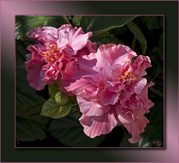 Spanish Flora by LynneJoyce