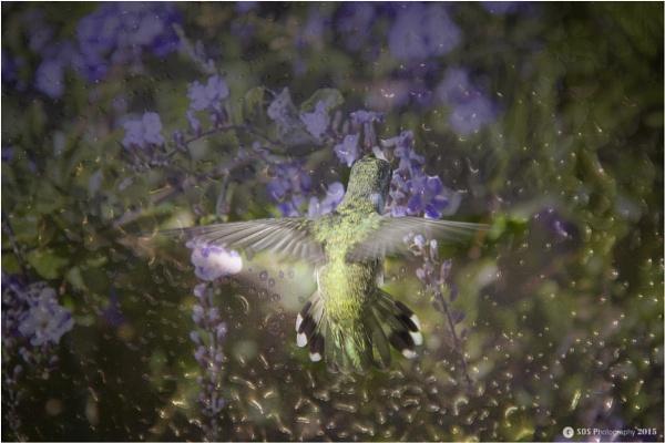 Purple Rain by Daisymaye