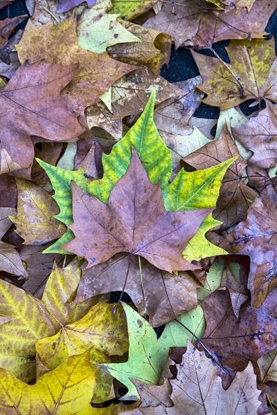 Autumn Leaves by GordonLack