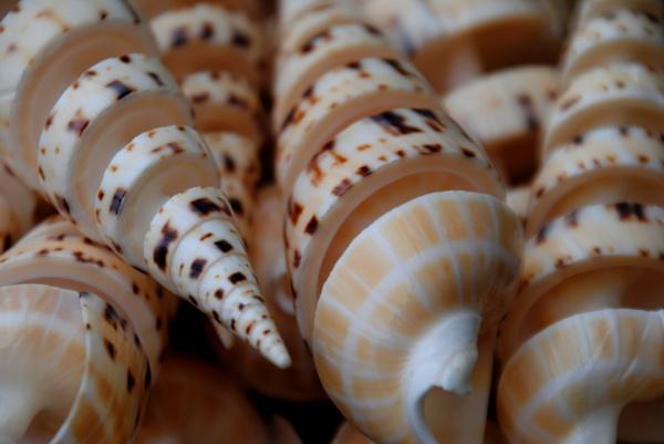 More shells... by Chinga