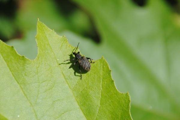 Bugs & green... by Chinga