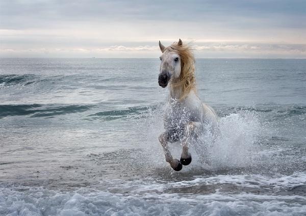 Sea Stallion by JaneMIchelle