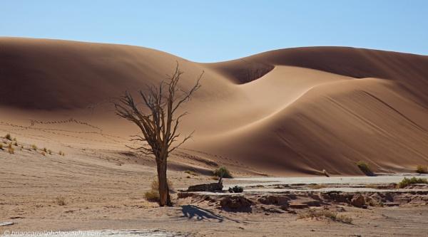 Namib Desert, Namibia Part 2 by brian17302