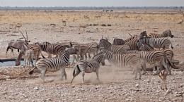 Etosha National Park, Namibia Part 2