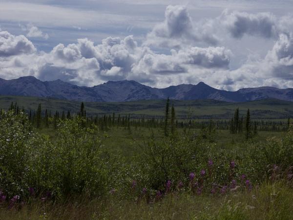 Alaska: July 2015 #22 by handlerstudio