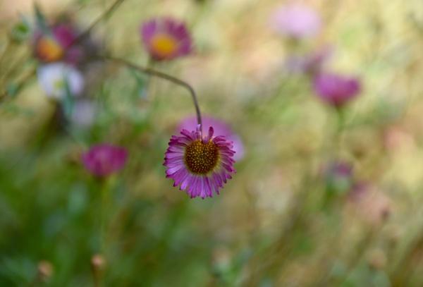 The flower garden by ColleenA