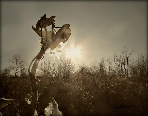 December Sun by doerthe