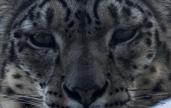 Cat\'s Eyes by Roymac