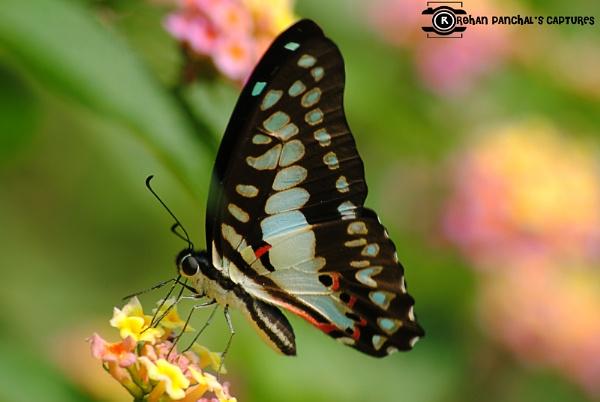 Butterflies in the Sky