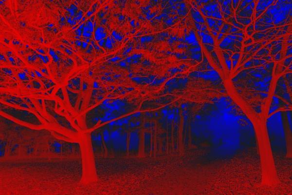 Seeing Red (in Tree-D) by jonlonbla