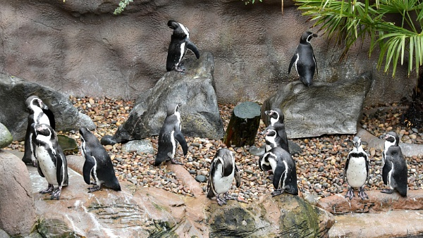 Penguin Party by robbenwick