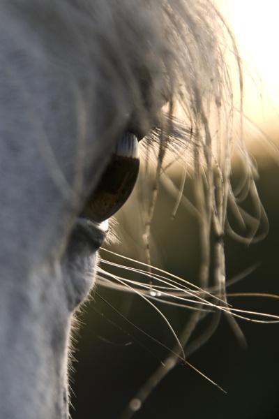 Horse Eye by Msalicat