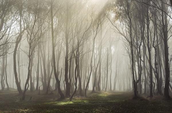 Shining Light by Trevhas
