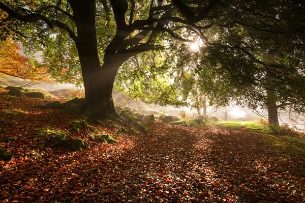 Autumn Delight by Trevhas