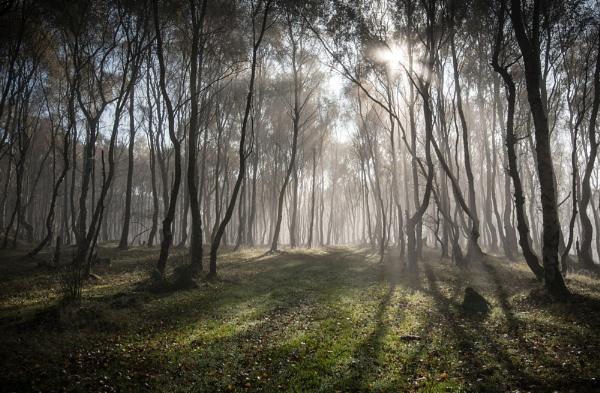 Into the Light by Trevhas